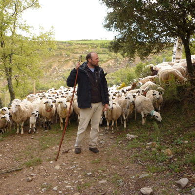 Work as a shepherd at Casa Mateu