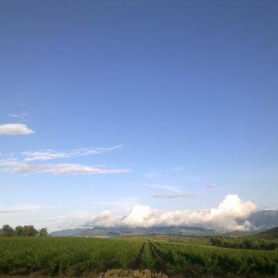 Visita la bodega El vinyer