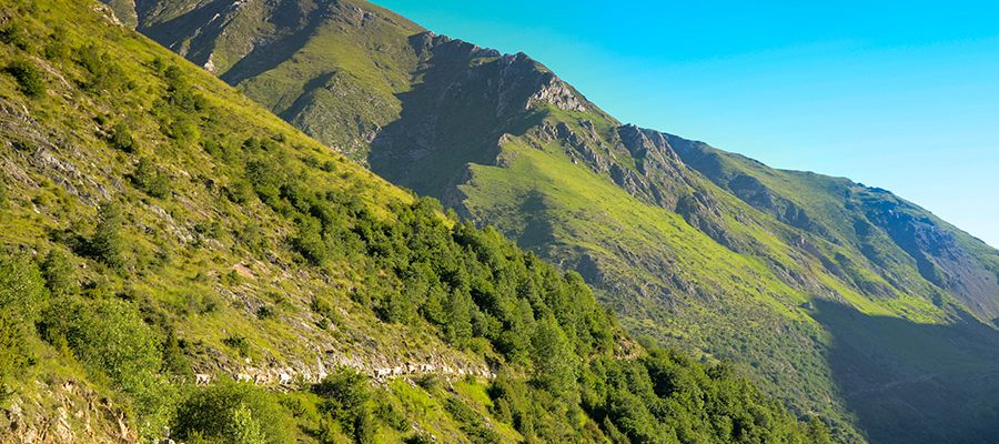 Transhumance from Casa Masover-Valley of Manyanet